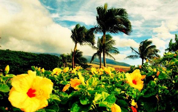 paisagem-hibiscus-amarelo-hawaii