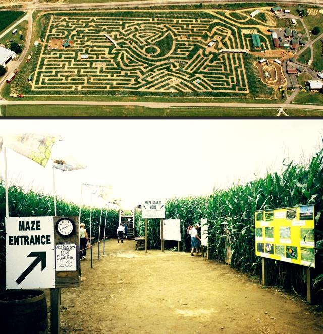 labirinto-Cherry-Crest-milho-pensilvania